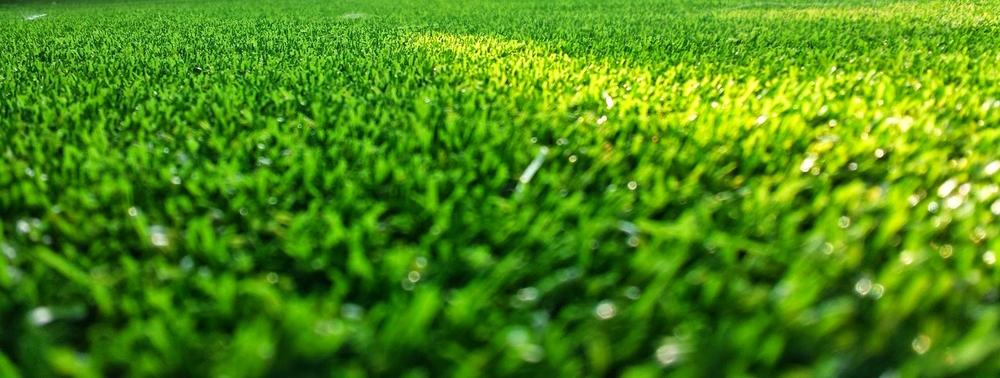 NGT_C_grass
