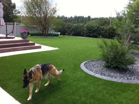 Next Generation Turf products are pet friendly