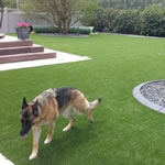 artificial grass around the home