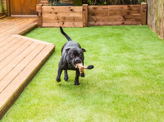 Artificial grass is safe from dog damage if installed properly