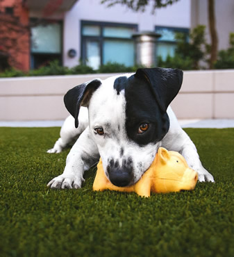 Pet friendly artificial turf deodorizer