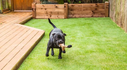 Artificial grass - great for dogs